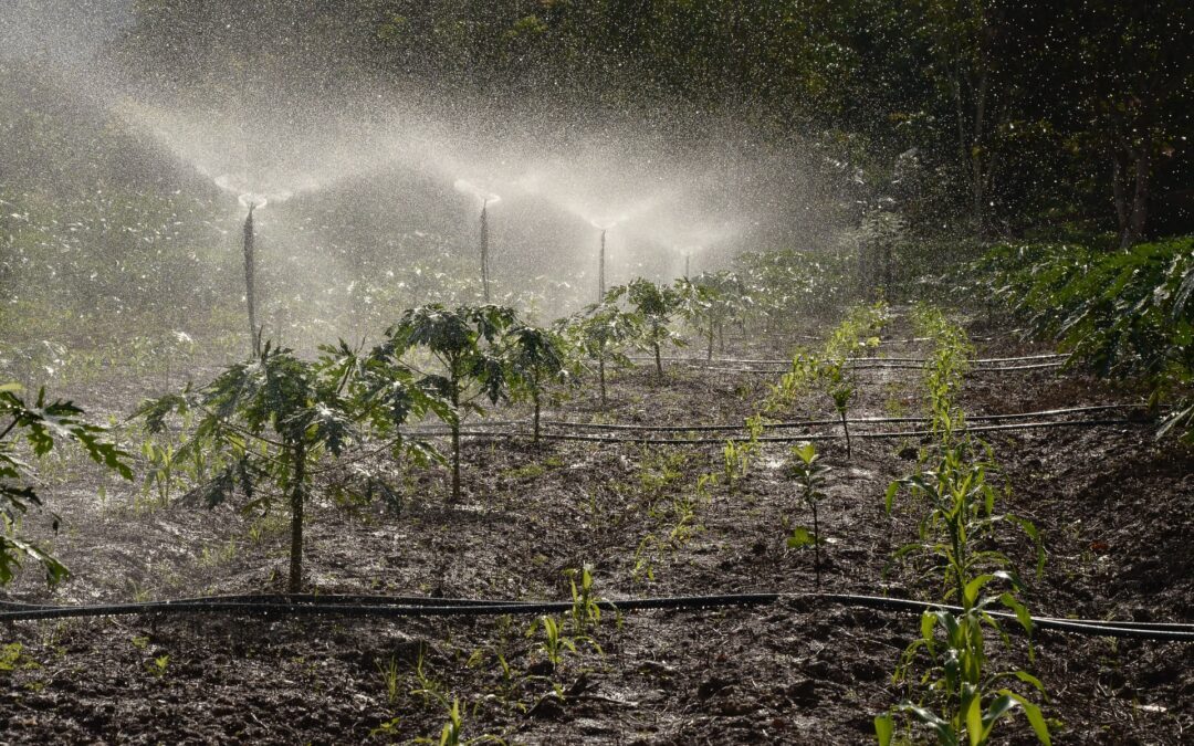 Automatic Watering Systems, Pros and Cons